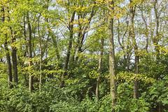 Bright Autumn Trees (Modkuse) Tags: autumn autumnlandscape autumnleaves fall fallcolors fallcolor nature natural natureart art artphotography artistic artisticphotography photoart outdoors bright colorful colors color fujifilm fujifilmxt2 xt2 fujinon wide wideangle wideanglezoomlens fujinonxf1024mmf4rois xf1024mmf4rois woods forest