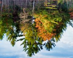 Reflection (Kevin Pihlaja) Tags: upperpeninsula michigan autumn reflection fallcolors lake nature tree skyreflection landscape panasonic lumixs1