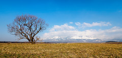 Tree and Mountains (kckelleher11) Tags: 2019 714mm hdr march olympus poland mzuiko mountains tree trip