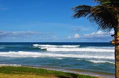 Meu amado Brasil (Ruby Augusto) Tags: praia beach praiaoceânica coqueiro clouds nuvens coconuttree grass