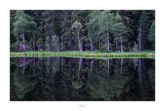 Black Mirror (Max Angelsburger) Tags: summer warm evening abend blackforest schwarzwald pitch black lake see mirror spiegel trees bäume reflections reflektionen sommerabend sommer europe europa germany deutschland badenwürttemberg july 2019