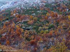¿Otoño o invierno? (josefacalzado) Tags: hayedodelapedrosa hayedos nieve snow paisajesnevados fotografíadepaisaje fotografíadepaisajes fotografíadenaturaleza landscape landscapephotography landscapes naturaleza naturephotography
