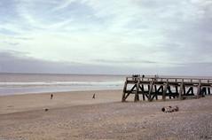 La plage de Veules-les-Roses (Philippe_28) Tags: veuleslesroses caux 76 seinemaritime france europe normandie normandy argentique analogue camera photographie film 135