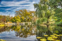 autumn at the  Botanica