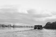 Toue cabanée sur la Loire (Didier Pled) Tags: touecabanée loire saumur