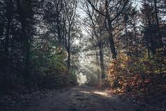 Lunterse Bos (Sjaco Manuputty) Tags: sunrays sun flares sunshine sunlight forest woods morning morningsun bos lunteren luntersebos landscape trees autumn autumncolors netherlands holland
