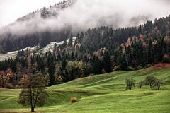colours of november (andre.kirtz) Tags: november nebel herbst schweiz naturschutz bergwald wald innerschweiz natur schwyz