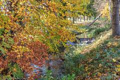 Autumn Colour by the river - DSC_0577 (John Hickey - fotosbyjohnh) Tags: 2019 autumn cabinteely november2019 river dublin ireland stream water tree autumncolour leaves autumnleaves riverbank nikon nikond750 flickr