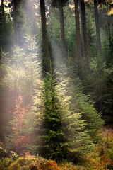 a good walk a day (kceuppens) Tags: boom tree nature buiten outdoor landschap landscape natuur fuji xt20 1855 zon sun light licht straal winterberg duitsland germany deutschland vakantie