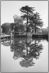 Day 315 Mirror image (Dominic@Caterham) Tags: trees reflections river thames water lock