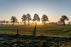 Sunrise in Holland series (Sjaco Manuputty) Tags: sunrise sunlight sunshine sunrays sunflare early earlymorning morning sun morningsun trees horizon shadow netherlands holland landscape landscapes landscapephotography grass field sky