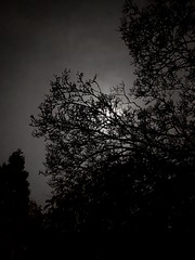 Moon over Metro Vancouver (clearbrook4) Tags: moon trees monochrome branches silhouette night vancouver burnaby