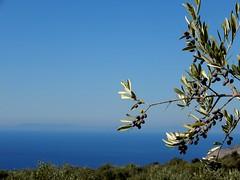 """""""Θεέ μου τι μπλε ξοδεύεις για να μη σε βλέπουμε..."""" ~Οδ. Ελύτης~ (fl_mala) Tags: wonderfulworld deepblue ilovegreece greece traveltogreece greecelovers discovergreece areopoli olives beautifulsea"""