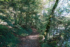 Walk along the Arve river (*_*) Tags: europe october morning matin 2019 hike randonnee nature hiking walk marche suisse switzerland geneve geneva sony rx100vii m7 autumn automne fall