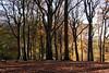 Autumn Worsley Woods