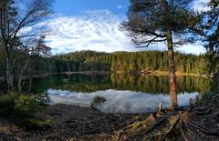 Möserer See - Tirol (Ernst_P.) Tags: aut möserersee österreich tirol see herbst wald wasser baum mösern samyang walimex 12mm f28 fisheye austria autriche bosque laguna lake forest autumn fall tyrol otoño