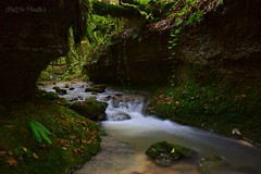 """I like to lose myself in a wild and enchanted nature... This is where I feel free..."" ✨ (miss.natjo) Tags: earth nature wildworld coursdeau watercourse canyon doubs franchecomte france photography poselongue longexposure nikon exploringworld neverstopexploring wonderfulworld lovenature"