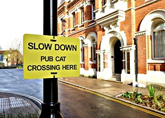 As signs go, this is pretty out there (Tony Worrall) Tags: greatermanchester manchester salford sign signage quirky cat metal warning bad fun funny buy sell sale bought item stock ilobsterit instagram place location outsider outside yellow tin street urban nice dailyphoto photohour great amusing words written area here photo