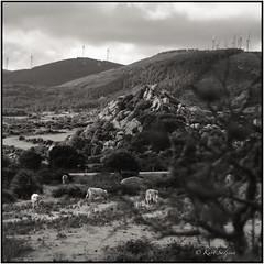 Valle della Luna_Tele Rolleiflex (ksadjina) Tags: gallura italia lasardegna telerolleiflex carlzeisssonnar135mmf4 kodak100tmax rodinal film scan analog 6x6 blackwhite nikonsupercoolscan9000ed