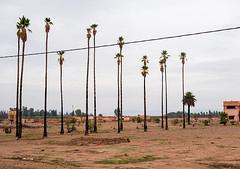 20181116-027 (sulamith.sallmann) Tags: pflanzen verkehr afrika baum botanik busfahrt einfach karg marokko nahverkehr natur palme palmen pflanze traffic sulamithsallmann