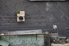 a picture of coconuts in a bucket of water that i took while on crutches and leaning over a balcony (badtweetgirl) Tags: street city italy geometric lines view space shapes minimal coconuts birdseye peopleless fruit canon5dmarkii