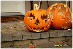 What Is The Scariest Thing In Your Neighbourhood? - Pumpkin XT8464e (Harris Hui (in search of light)) Tags: harrishui fujixt1 digitalmirrorlesscamera fuji fujifilm vancouver richmond bc canada vancouverdslrshooter mirrorless fujixambassador xt1 fujixcamera fujixseries fujix fujixf60mmf24 fujiprimelens fixedlens halloween pumpkin scary evilhongkongpolice hongkong hongkongprodemocracymovement hong kong protest 11novembershootinginhongkong pumpkinhead jackolattern