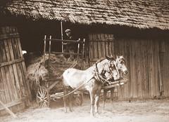 Ferme québécoise, vers 1929. Lieu précis non mentionné. (DubyDub2009) Tags: archive architecture ferme barn country campagne charrette cheval horses québec personnage grange