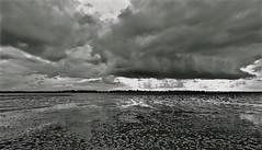 Low tide in the Elberiver (Günter Thomsen) Tags: lowtide elbe hamburg pagensand nebenelbe schwarzweis nikon wolkencloud