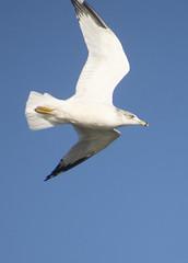 gull-visiting (dianabog ) Tags: tablerocklake seagull