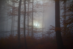 light (M.Gustave) Tags: forest fog sun trees leaves autumn fall