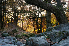 Autumn, National Trust Aira Force (nickcoates74) Tags: lakedistrict cumbria ullswater autumn sony a6300 ilce6300 1650mm epz1650mmf3556oss nationaltrust airaforce woods sel1650