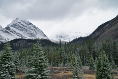 Snowy Day in the Kananaskis (Bernie Emmons) Tags: kananaskis mountains snow trees clouds landscape canada alberta natureandnothingelse