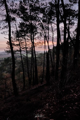 Valley of the Semnon (PhrozenTime/WAHLBRINKPhoto) Tags: timeofyear autumn fall timeofday evening dusk sunset geography forest valley hillside europe french france brittany illeetvillaine poligné tertregris illeetvilaine35