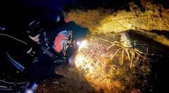 Lobster (YellowSingle 单黄) Tags: ocean atlantic hero7 gopro sousmarine plongee exploration photograph photo underwater spain uhaina diving diver scuba lobster