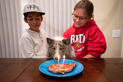 Murphy's Second Birthday (1 of 5) (Quentin Biles) Tags: 2435 art ava d850 jayden murphy nikon sheltie shetlandsheepdog sigma birthday dog