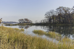 Autumn View (JMS2) Tags: nature park autumn scenic marsh bay inlet seagrass island pbp bronx pelhambaypark