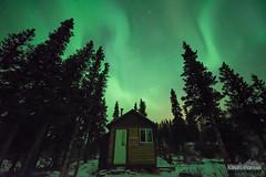 The Aurora Cabin (kevin-palmer) Tags: alaska october fall autumn alaskarange aurora auroraborealis northernlights bright green night sky colorful stars starry clear cold nikond750 sigma14mmf18 richardsonhighway snow donnellycreekrecreationsite statepark cabin trees borealforest
