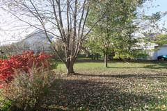 Our Backyard--Then and Now (joeldinda) Tags: burningbush tree hedge house fall autumn bush colors 4777 garage november 4776 potter g9x 2019 powershotg9xii canon yard home mulliken