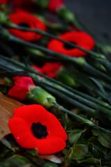 Remember (flashfix) Tags: november112019 2019inphotos flashfix flashfixphotography ottawa ontario canada nikond7100 40mm poppy poppies carnations flowers remembranceday