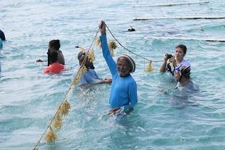 Seaweed Industry Development