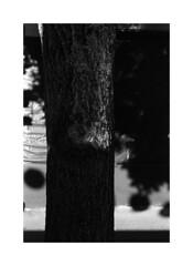 (billbostonmass) Tags: trix 400 ddx film 14ddx800min68f m6 50mm summicron rangefinder epson v800 boston massachusetts