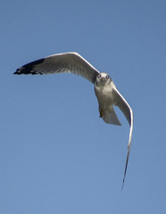 gull what? (dianabog ) Tags: tablerocklake seagull
