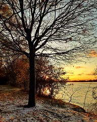 naked tree.. (angelinas) Tags: glorious nakedtree tree sundown goldenhour sunlight tramonto sunset landscapes naturelovers outdoorphotography moody mood earthy branches paysages natureza naturallight skyline sky ciel atardecer sunsetlover evening clouds water river riverbank riviere