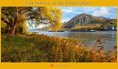 Spätherbst am Drachenfelsen/Late autumn on the Drachenfelsen (shaman_healing) Tags: herbst autumn farben colors fluss river baum tree landschaft landscape germany rheinlandpfalz drachenfelsen berge