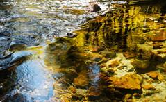 Creekside (San Francisco Gal) Tags: creek stream water rock rill easternsierra autumn 2019 ngc npc