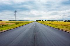 Fresh Asphalt Road (Bracus Triticum) Tags: fresh asphalt road アルバータ州 alberta canada カナダ 8月 八月 葉月 hachigatsu hazuki leafmonth 2019 reiwa summer august