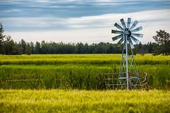 Windmill Pond (Bracus Triticum) Tags: windmill pond アルバータ州 alberta canada カナダ 8月 八月 葉月 hachigatsu hazuki leafmonth 2019 reiwa summer august