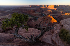 Dead Horse Point (colincromar) Tags: desert landscape moab utah redrock red rock orange tree juniper canyon dead horse point southwest america usa vista view sand rocks dirt road river colorado bend neck wide angle sony zeiss 1635 ultrawide foreground sunrise glow nature outdoors outside adventure explore texture above alpha a7iii handheld valley sun shine day daylight natural light colors colorful