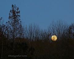 Beaver Moon (Mary Sonis) Tags: beaver moon twilight full november dusk frost