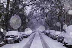 Early Risers (aerojad) Tags: eos canon 80d dslr 2019 autumn outdoors city urban chicago snow snowing snowkeh cityscape citylife cityview edgewater bokeh
